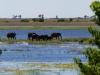 badende Elefanten und Flusspferde
