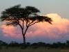 Sonnenuntergang im Elephant Sands