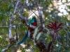 Quetzal (der Göttervogel Mittelamerikas)