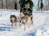 Hundeschlittenrennen1