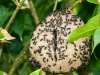 Termiten- oder Wespennest